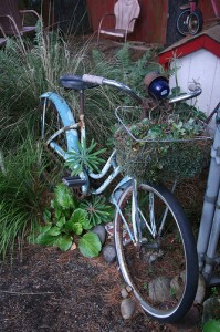 Old bike used as garden art!